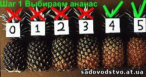 Как выбрать ананас спелый в магазине и сколько он хранится