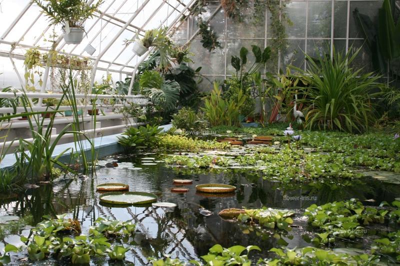 Ботанический сад самара: история создания, особенности, коллекции и экспозиции, режим работы