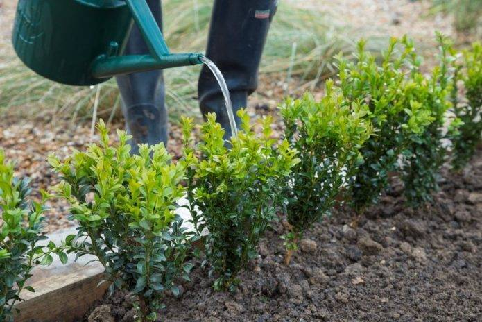Стрижка кустов: варианты придания формы кустам и живой изгороди (120 фото)