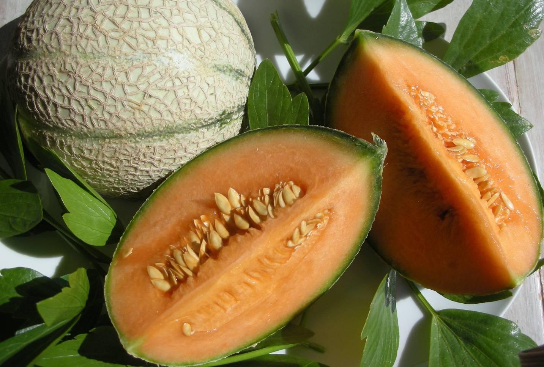 Дыня канталупа: описание, особенности выращивания, вкусовые качества
