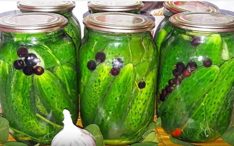 Сорта огурцов для засолки на зиму: название и описание лучших, простые рецепты