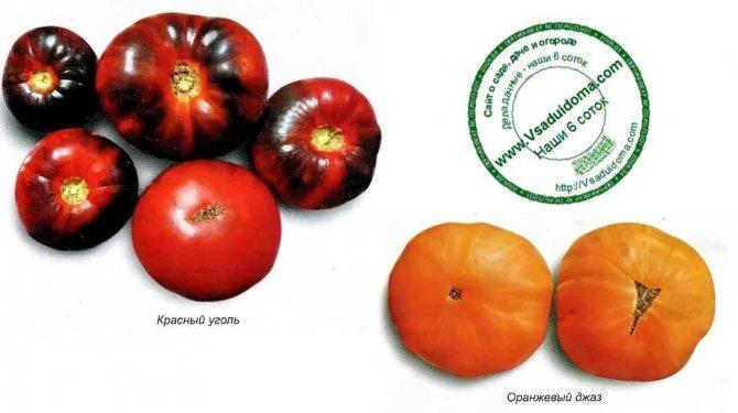 Семена томатов от коллекционеров на 2021 год: лучшие сорта, их наименования с подробным описанием и фото