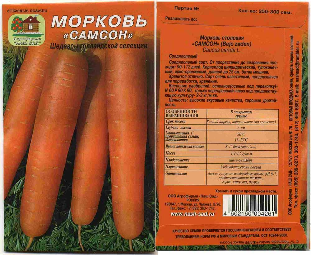 Когда сажать морковь осенью в 2020 году, посадка под зиму – что нужно знать