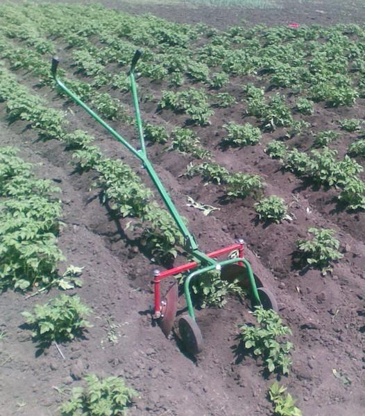 Когда и как окучивать картофель: пошаговая инструкция, сроки и правила