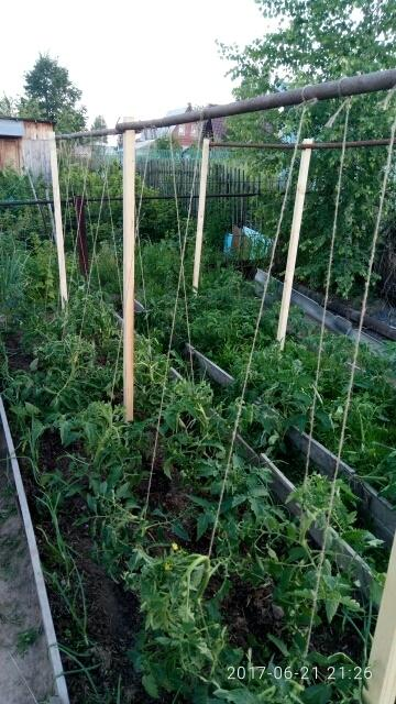 Особенности изготовления шпалер для помидоров