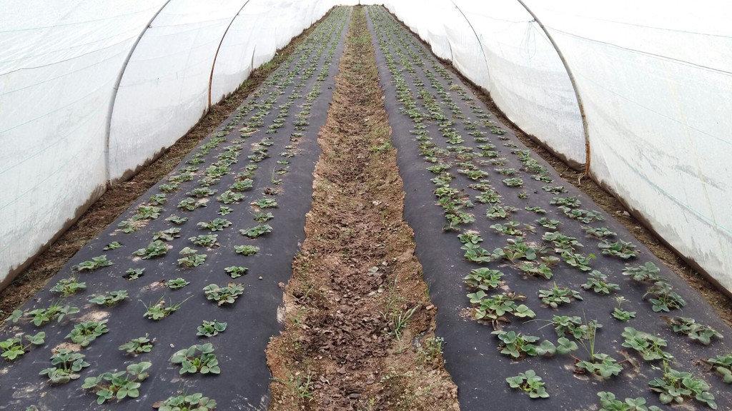 Чем закрыть дно теплицы чтобы не росли сорняки?