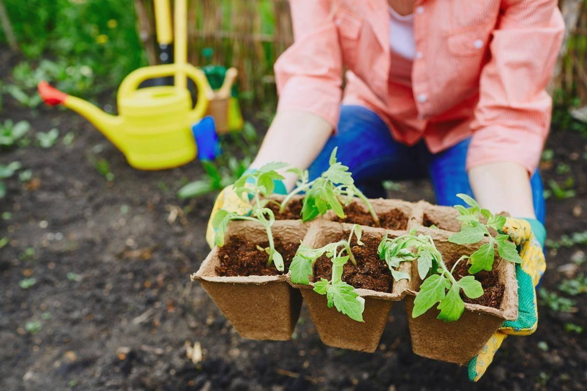 Декоративная капуста посадка и уход | все о растениях