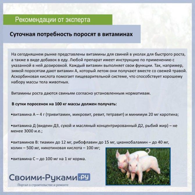 ᐉ разведение свиней в домашних условиях для начинающих - zooon.ru