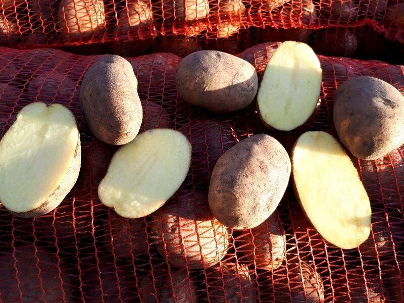 Картофель бриз: характеристика сорта, описание, достоинства и недостатки с фото
