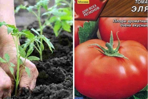 Томат петруша огородник: отзывы, фото, описание и характеристика, урожайность,   tomatland.ru