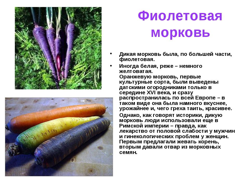 Фиолетовая морковь описание сорта с фото отзывы