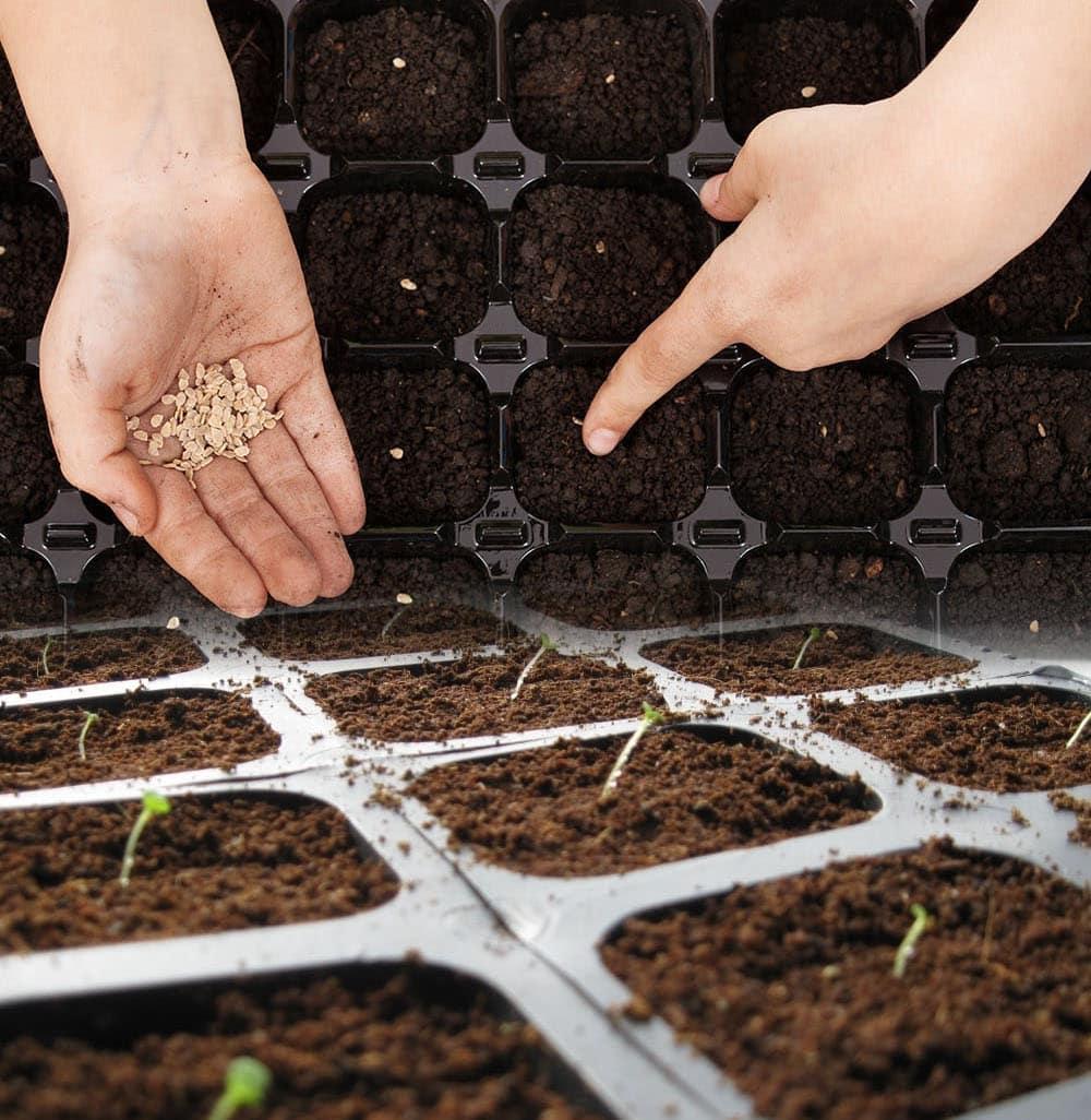 Как посадить морковь семенами в открытый грунт, сроки и способы посева