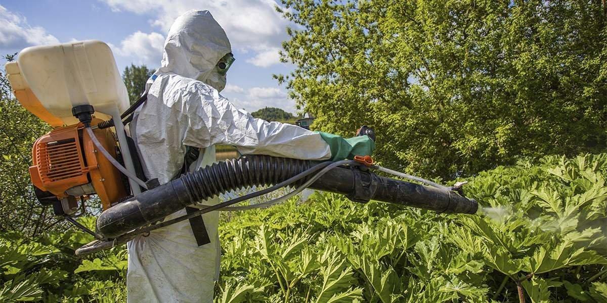 Список гербицидов против амброзии и как навсегда избавиться от сорняка