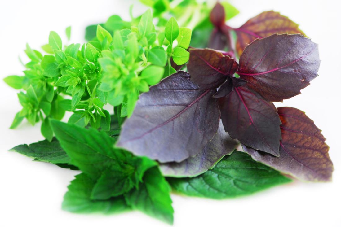Базилик фиолетовый: лучшие сорта с описанием и фото