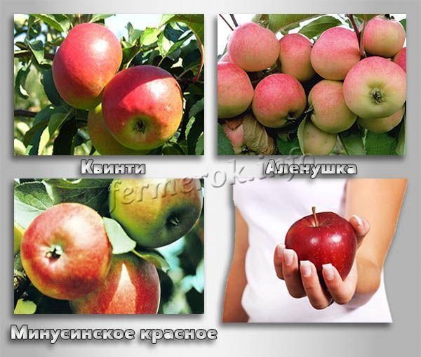 Сорт яблони мельба, описание, характеристика и отзывы, а также особенности выращивания данного сорта