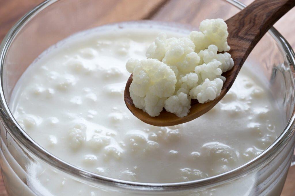 Как вырастить молочный гриб с нуля в домашних условиях? польза и вред этого продукта