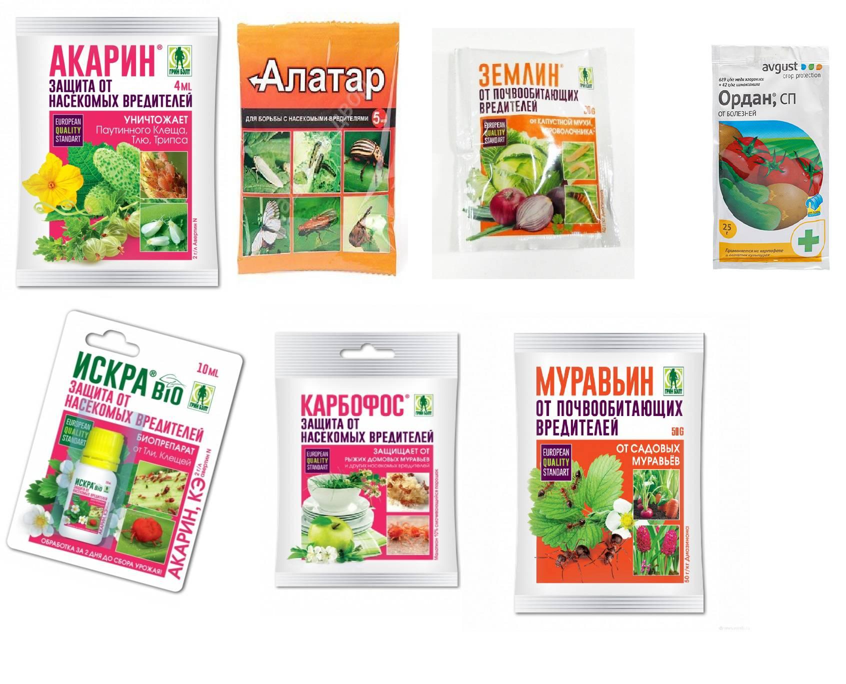 Пищевая сода для обработки капусты от гусениц — правила и техника применения