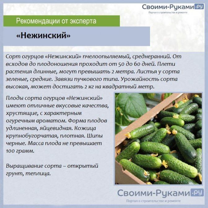 Огурец конкурент: характеристика и описание сорта, рекомендации по его выращиванию, отзывы об урожайности и сложностях ухода