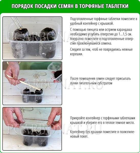 Как вырастить рассаду огурцов в торфяных таблетках: пошаговый мастер-класс с фото