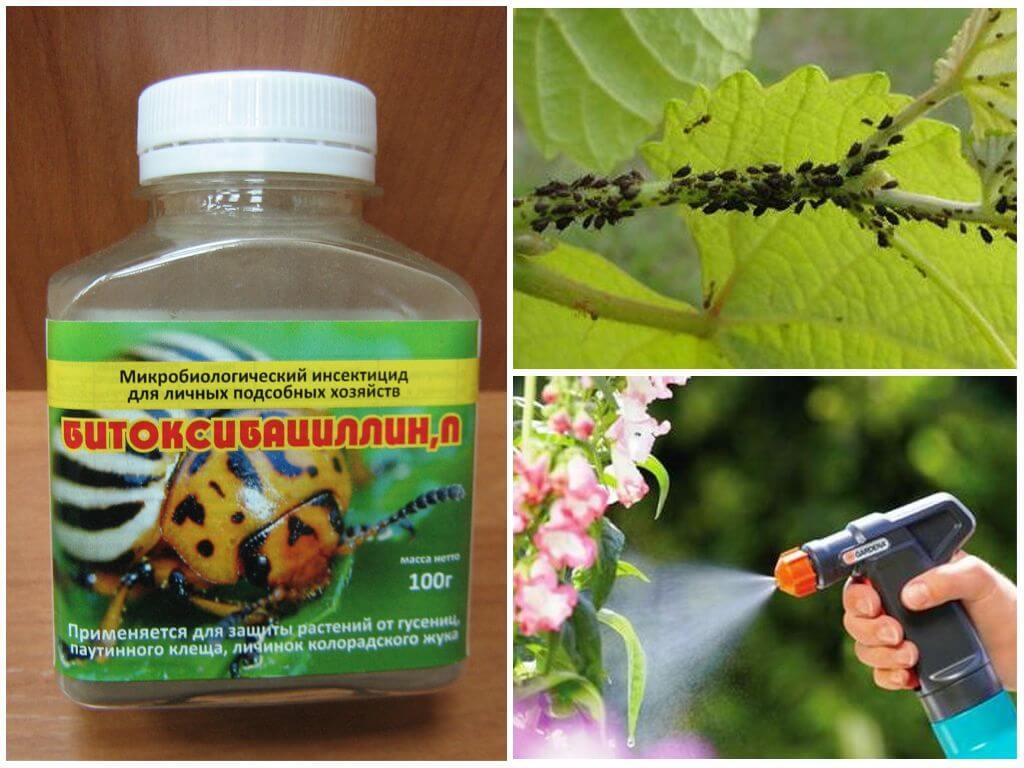 Разнообразные методы борьбы с вредителями сельскохозяйственных культур