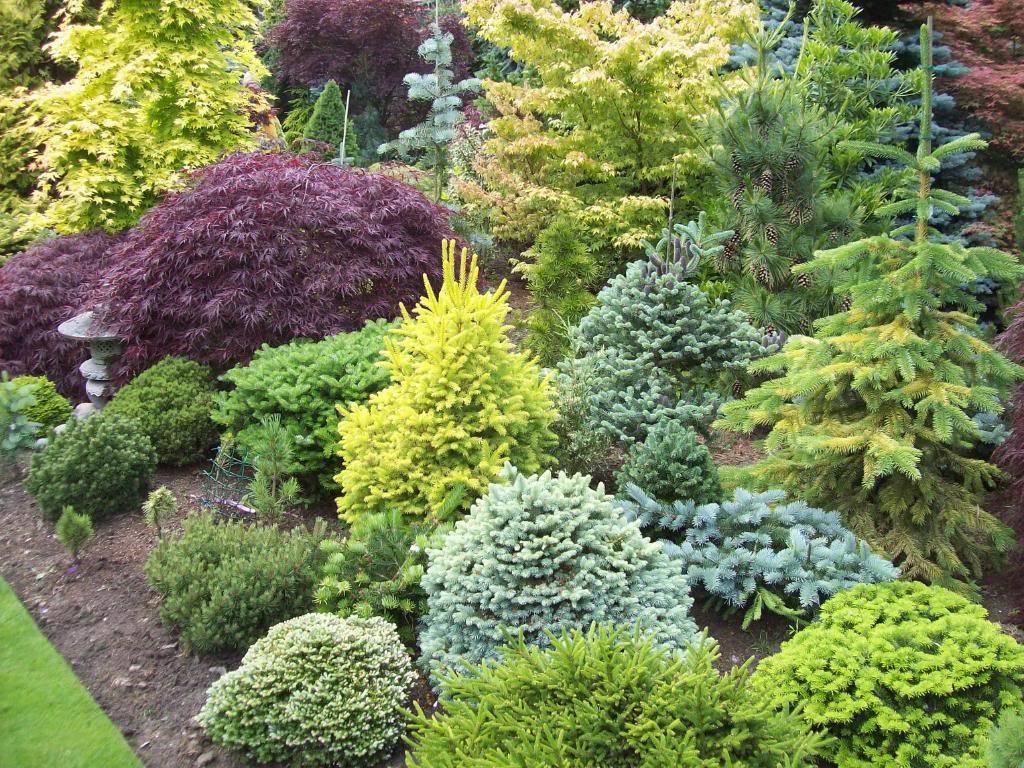 Преимущества и недостатки использования карликовых деревьев в саду