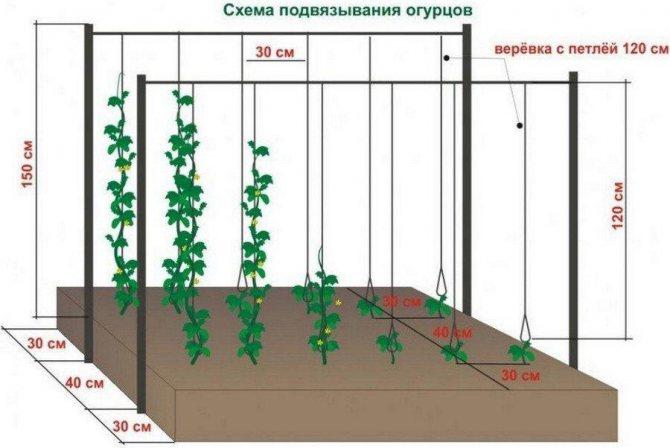 Сетка для огурцов — советы по выбору, особенности и варианты натяжения сетки для выращивания огурцов (100 фото)