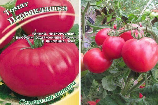 Характеристика и описание сорта томата Первоклашка, его выращивание