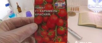 Томат белфорт f1 — описание сорта, отзывы, урожайность