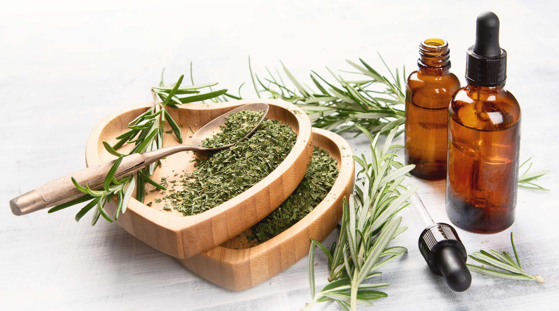 Лечебные свойства и противопоказания розмарина для здоровья, его польза и вред