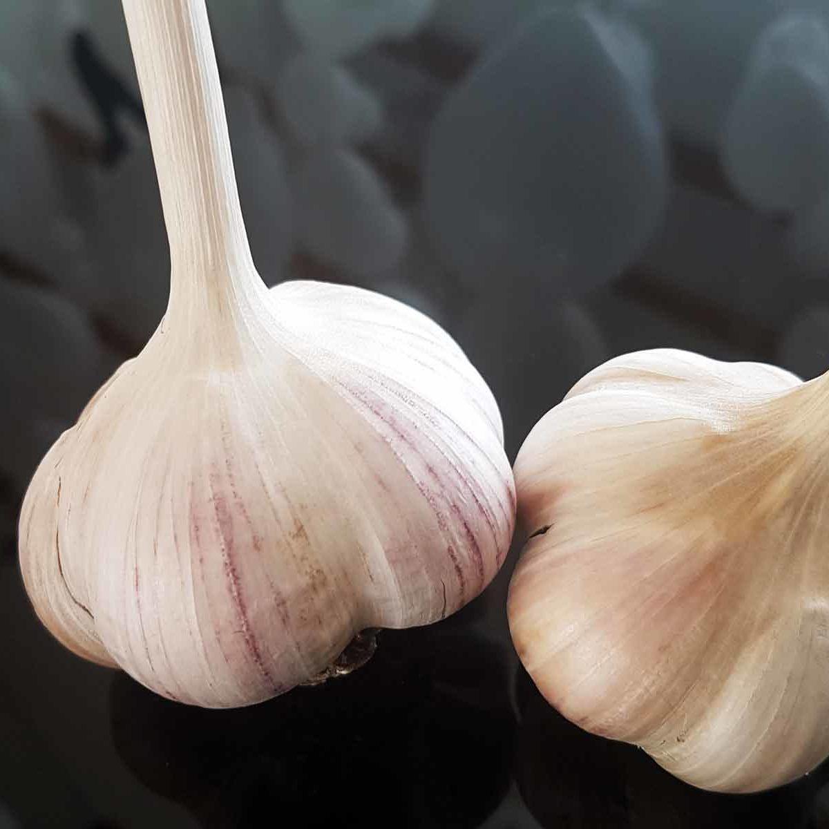 Сорта чеснока озимого с фото: лучшие и хорошие, нестрелкующиеся, самые крупные, а также описание видов скиф, грибовский и жеребец