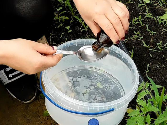 Нашатырный спирт для лука и чеснока: как разводить для подкормки, от вредителей и болезней