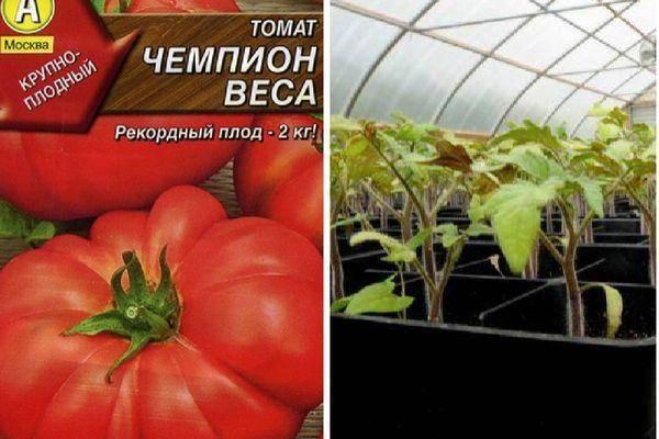 Описание сорта томата чемпион f1 и его характеристики – дачные дела