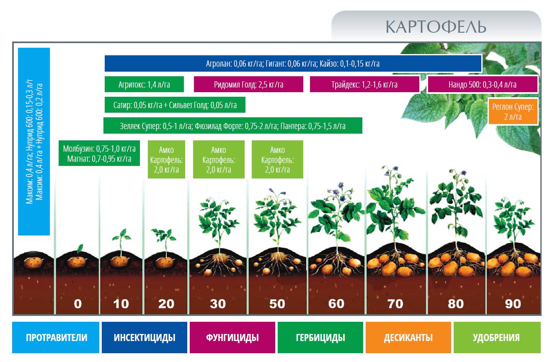 Внекорневая подкормка растений - удобрения, цели проведения работ