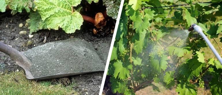Подкормка винограда от а до я - весной, летом, осенью, когда и чем подкормить виноград - почва.нет