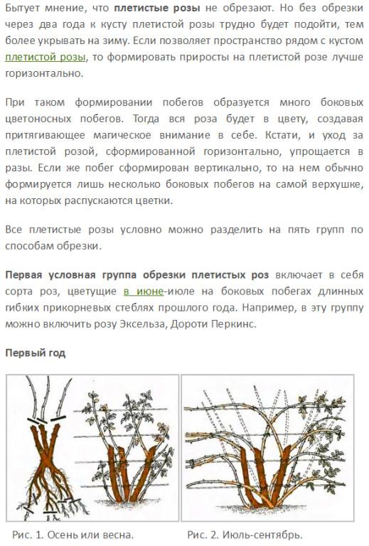 Клематисы — посадка и уход в открытом грунте для новичков