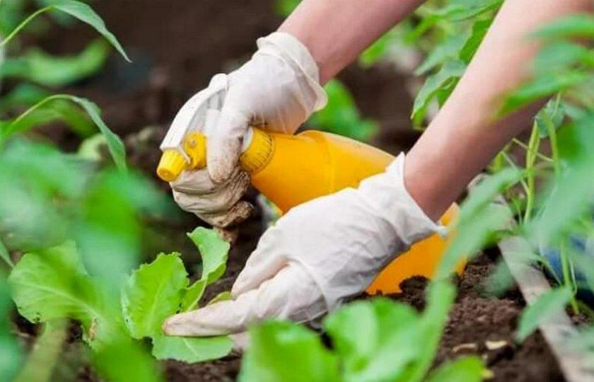 Препараты для обработки капусты от вредителей: чем из ядохимикатов опрыскать или полить, и дозировка инсектицидов, сыворотки и иных средств для борьбы с насекомыми