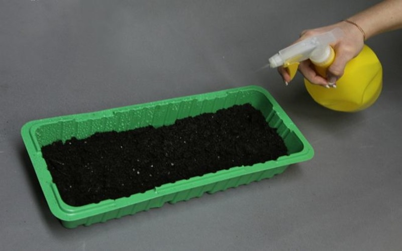 Особенности выращивания и ухода за шпинатом