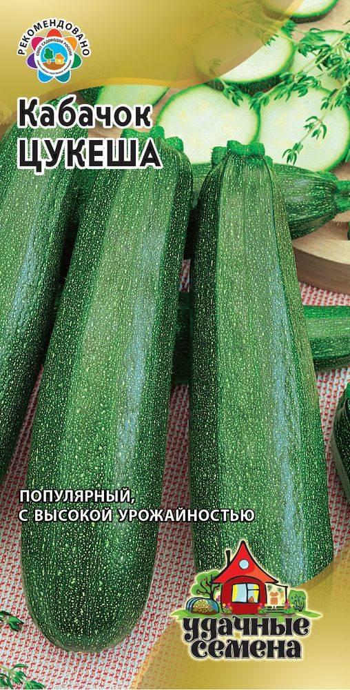 Описание кабачка сорта «цукеша» — характерные особенности