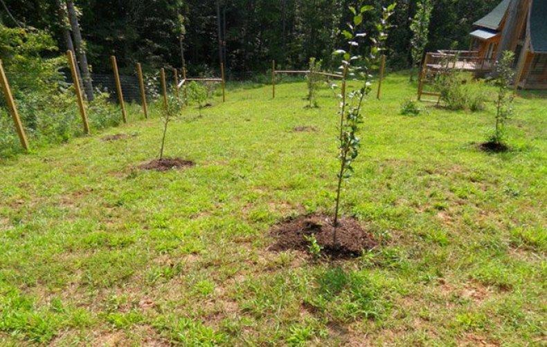 Посадка вишни весной: как посадить вишню саженцами | спутниковые технологии
