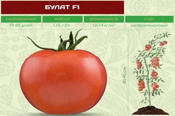 Томат альгамбра: описание и характеристика сорта, урожайность с фото