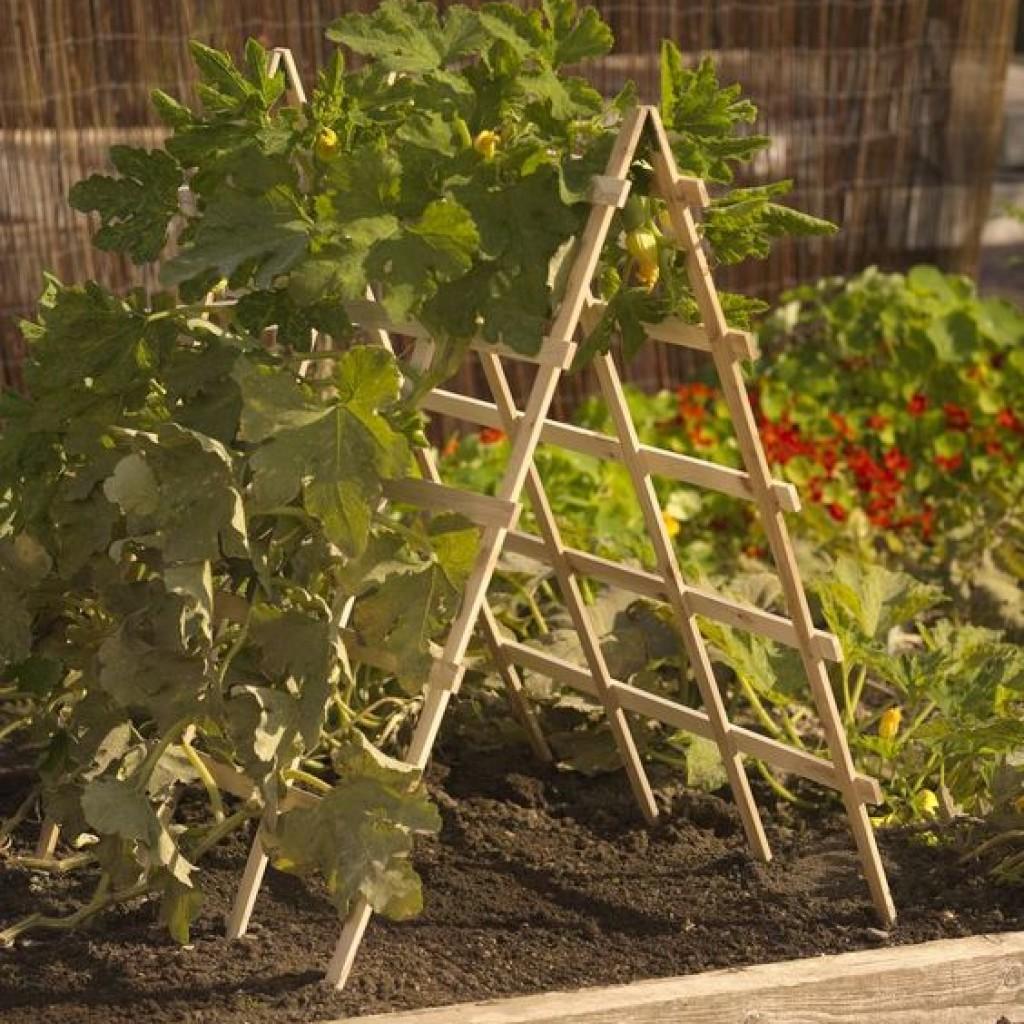 Шпалера своими руками - 110 фото стильных украшений сада и вертикальных вариантов озеленения