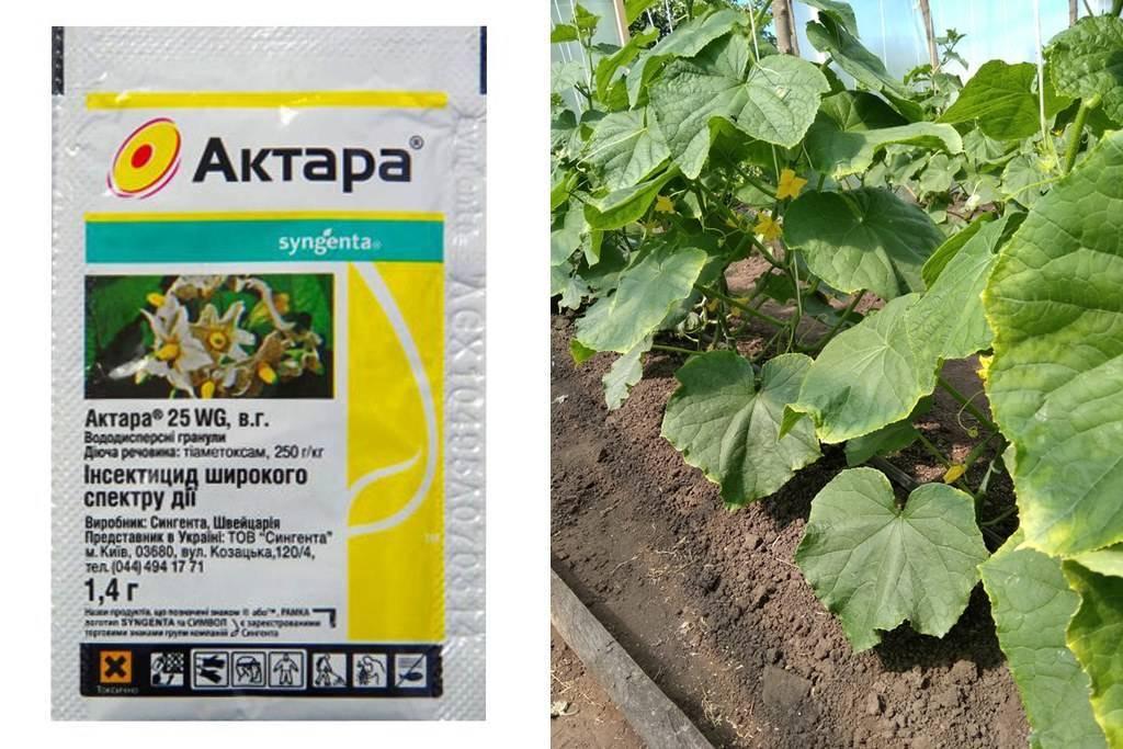 Инструкция по применению средства Актара для обработки огурцов в теплице