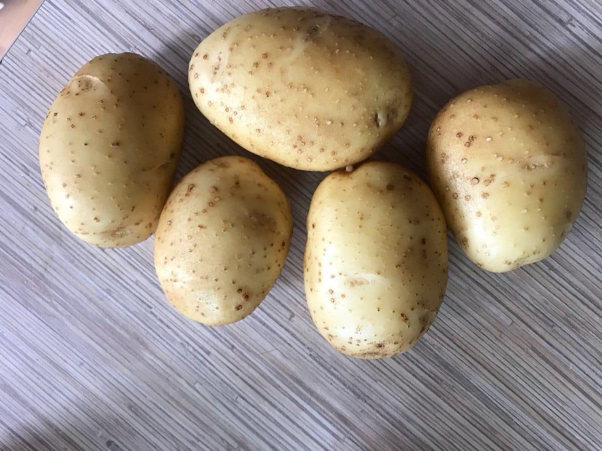Сорт картофеля бриз: подробное описание и характеристика, особенности выращивания, советы по посеву, уходу и сбору урожая, а также фото