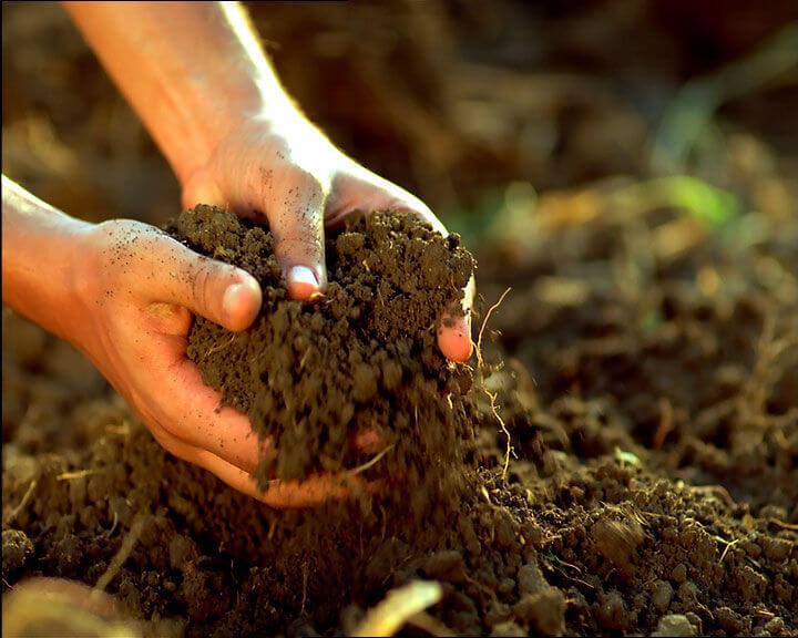 Снижение плодородия почвы