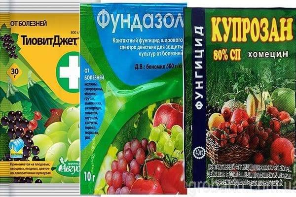 Фалькон для винограда. фунгицид фалькон: свойства, действие, как и для чего применять в частном хозяйстве