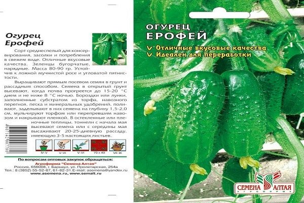 Сорта огурцов для открытого грунта самоопыляемые (самоопыляющиеся): обзор лучших, советы по выбору