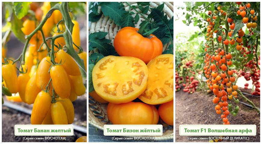 Томат оранжевый банан: описание сорта, выращивание, отзывы