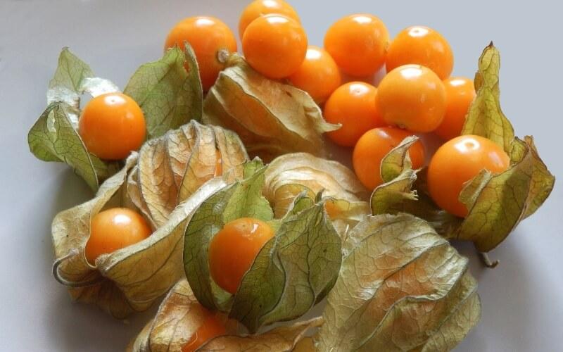Физалис овощной и ягодный: рецепты приготовления на зиму
