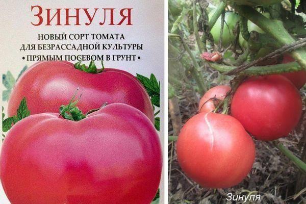 Описание томата Зинуля и особенности выращивания сорта