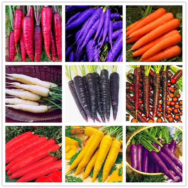 Фиолетовая морковь описание сорта с фото отзывы - скороспел